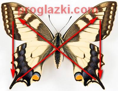 """Упражнение """"бабочка"""" для восстановления зрения"""