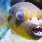 С чем связано помутнение глаза у рыб? Что такое глистный катаракт?