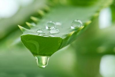 Алоэ Вера - использование травы в косметике