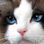 Заболевания глаз у кошек: разновидности и симптоматика