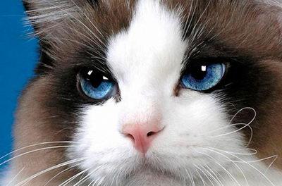 Неприятные заболевания глаз у кошек