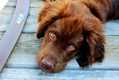Распространенные болезни глаз у собак
