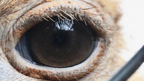 Секрет зрения верблюда