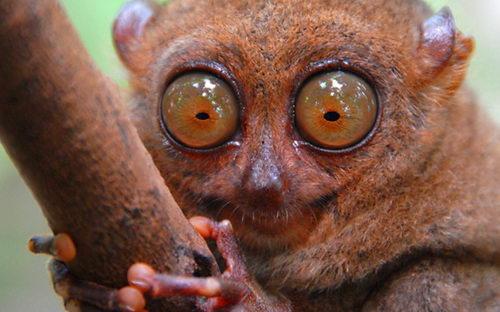Какое зрение у животных?